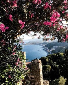 BEST VIEW 2017 // Have you ever been to Sicily? and I visited the fascinating italian island in June. We totally loved it! My highlight was the visit of Taormina. There you find an ancient greek theatre and an amazing view. Ancient Greek Theatre, Have You Ever, Beautiful Landscapes, Travel Inspiration, Island, History, Amazing, Instagram Posts, Pictures