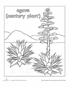 Desert plants great for dioramas books projects for Desert plants coloring pages
