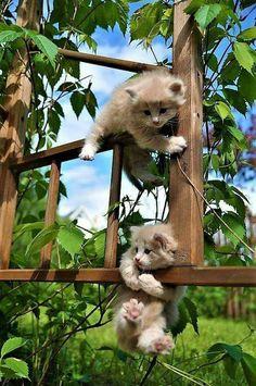 Momma,HELP!!!!!
