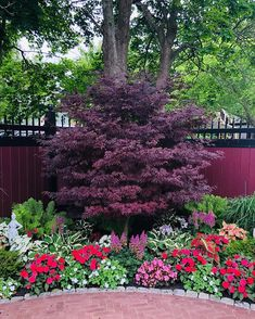 It's all about shade gardening today! We all enjoy sitting where it's cooler and while doing that....you need a design that stands out… Landscape Design Plans, Landscape Architecture, Rendered Plans, Shade Garden, Make It Simple, The Help, Natural Beauty, Garden Design, Backyard
