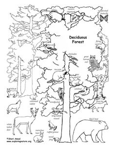 e42d94a604c17fc8cf640d0edcddbe3b coloring pages forests