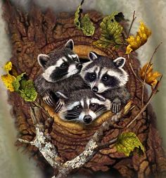 """Racoons """"First One Out Wins!"""" - Steven Michael Gardner"""