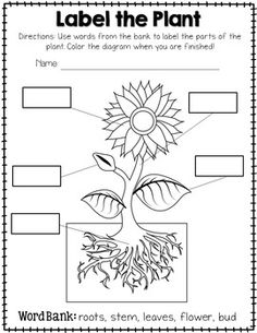 Plant Labeling Worksheet - FreebieTeach your students about the different parts of a plant with this simple yet educational worksheet! Blank boxes on the worksheet correspond with the parts on a diagram. Word bank is included on the worksheet! This freebie is a sample from my Life of a Plant Activity Set!