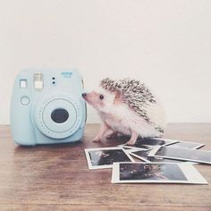 These cute hedgehogs are going to make you wish you had one as a pet of your own. You'll love these funny and adorable photos of little hedgehogs that were posted on Instagram.