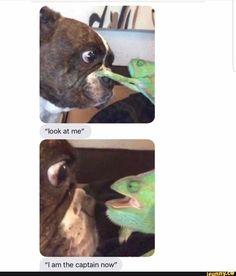 """I am the captain now"" - iFunny :) Funny Animal Memes, Stupid Funny Memes, Cute Funny Animals, Funny Relatable Memes, Haha Funny, Funny Cute, Hilarious, Funny Stuff, Memes Fr"