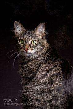 Animal Rescue Cat (Tobias Gawrisch / Mülheim an der Ruhr / Germany) #Canon EOS 7D #animals #photo #nature