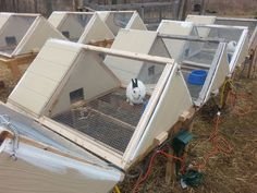 """The blogger wrote. """"Super great A-frame rabbit hutch!   This is the rabbit hutch design I use for all my rabbits. It's safe, sturdy, attractive, predator-proof, tornado-proof, and hurricane-proof."""""""