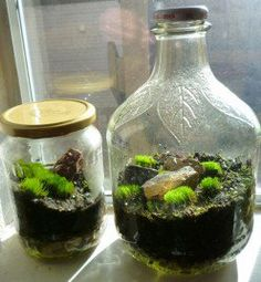 Moss Terrariums in jars. The one on the left was made from an old pickle jar, while the one on the right was constructed from an apple cider glass jug. Plastic Terrarium, Bottle Terrarium, Terrarium Containers, Succulent Terrarium, Bottle Plant, Self Sustaining Terrarium, Growing Moss, Moss Decor, Terrarium Wedding