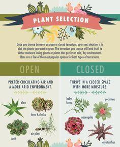 The best plants for open vs closed terrariums - Click for more terrarium tips.