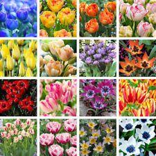 5Pcs rare seed rainbow tulip bulbs seeds beautiful flower seeds Super e