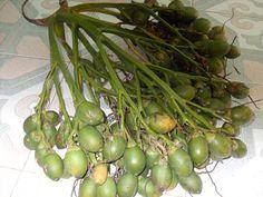 Areca nut fruits