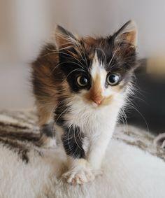 Fluffy!!