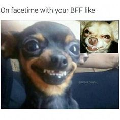 memes hilarious can't stop laughing ; memes to send to the group chat ; memes hilarious can't stop laughing funny ; Funny Animal Jokes, Funny Dog Memes, Crazy Funny Memes, Really Funny Memes, Cute Funny Animals, Funny Animal Pictures, Funny Relatable Memes, Funny Cute, Funny Dogs