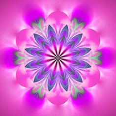 bigstock-absztrakt-Egzotikus-Flower-Psyche-162650330.jpg