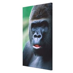 >>>The best place          Gorilla 3 gallery wrapped canvas           Gorilla 3 gallery wrapped canvas We have the best promotion for you and if you are interested in the related item or need more information reviews from the x customer who are own of them before please follow the link to see ...Cleck Hot Deals >>> http://www.zazzle.com/gorilla_3_gallery_wrapped_canvas-192413870498911152?rf=238627982471231924&zbar=1&tc=terrest