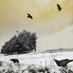 photo-eye | BLOG: Portfolio: Tom Chambers' Animal Visions (another of my favorite artists).