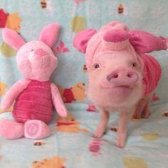 Piggy Pig | Animals Zone