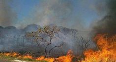Brasil em chamas: 100 mil queimadas num único mês