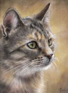 Vic Bearcroft~Artist. I suppose my favourite medium/support combination has to be pastels and velour. This one is our Nell; originally painted for a magazine article. For me, pastel and velour just give such lovely soft textures for fur and fine detail for shiny eyes.