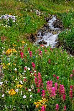 Colorado pictures, Flowers, Flower, Colorado Wildflower photos, waterfall, photos, image, Uncompahgre, Mountain , photo