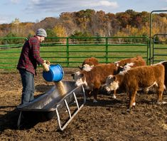 #TipsForFarmers: Remember that you may need to feed your livestock a little extra during the wintertime. Strive to feed them at night. Feeding farm animals late in the day during the cold will increase heat production during the night by the activity of eating and ruminating. The Farm Book, Farm Insurance, Off The Grid News, Farm Unit, Kids Study, School Themes, Livestock, Farm Life, Cattle