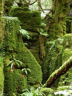 Puzzlewood, Forest of Dean, Gloucestershire, England | Recent Photos The Commons 20under20 Galleries World Map App Garden ...