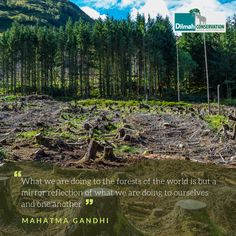 As someone who practiced opposition through non-violence, Mahatma Gandhi realized the cause and effect of deforestation. It is important that we realize, nature is an interconnected web and humans are a part of it. If one component fails the whole system will come tumbling down. Forests hold a significant place in nature and it should be our privilege to protect them. Cause And Effect, Human Services, Mahatma Gandhi, Social Justice, Forests, Monday Motivation, Conservation, Sustainability, Fails