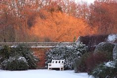 Winter  #gardens, #gaynes park