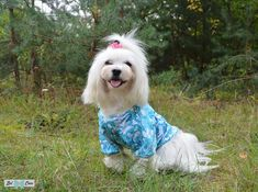 "Hoodie, Blouse ""Spring Ferns"", clothes for dogs Bel Cane Turquoise Color, Ferns, Hoodies, Knitting, Spring, Dogs, Cotton, Animals, Clothes"