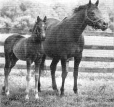 A daughter of home-bred Calumet Farm stallion Commodore M and Grade I stakes winner Nellie L, Comely Nell had a bright future when she was born in 1962. However, an injury to her eye suffered when she was still a foal left her unable to race. At three, she was bred to Red Bull Stable's…