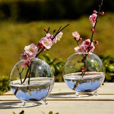 Clear Ball Glass Hanging Vase Bottle Terrarium Hydroponic Container Plant Pot Flower DIY Home Garden Decor ** Check this useful article by going to the link at the image. #HomeDecor