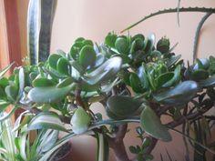 Air Plants, Bonsai, Gardening, Lawn And Garden, Horticulture, String Garden