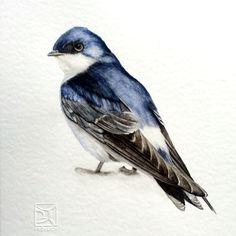 GOLONDRINA Chileanbird in watercolor  LORENA FRÖHLICH M