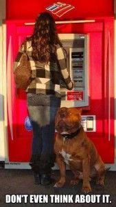 gaurd dog