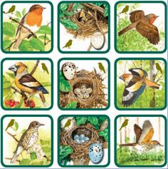 vtáky Animal Activities, Activities For Kids, Bible Crafts, Kids Crafts, Alternative Education, File Folder Activities, Montessori Practical Life, Forest Theme, Bird Theme