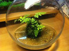 wabi kusa    How To:  http://www.aquariumlife.com.au/showthread.php/1285-Journal-Nano-paludarium-quot-Wabi-kusa-quot-style...!    Wabi Kusa Blog:  http://www.wkguy.com/blog/