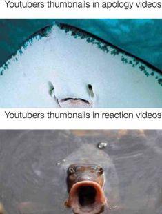 These fish do be spittin' facts doe - memes Stupid Funny Memes, Funny Relatable Memes, Haha Funny, Funny Stuff, Life Memes, Dankest Memes, Deadpool, Pretty Meme, Quality Memes