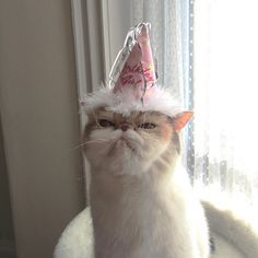 unimpressed cats — birthday girl