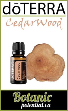 Cedarwood essential oil emits a warm and woody aroma that inspires feelings of wellness and vitality, and is often used during massage to relax and soothe. Cedarwood Essential Oil, Essential Oils, Doterra, Essentials