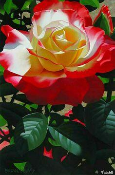 Sua tarde seja tão bela ...como essa rosa