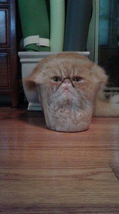 Hmm.. Cat http://ift.tt/2taFune
