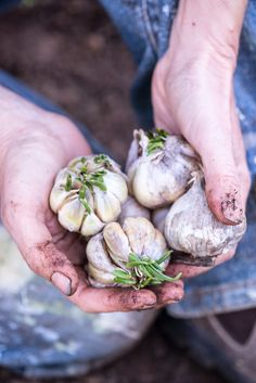The Lost + Found Department - garlic planting.