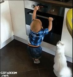 Cat stopping baby from turning on the oven. More responsible than the camera person