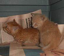 Gatos Timoty y Tines. El sacrificio de su madre los salvó. Animals, Kittens For Adoption, Foot Prints, Gatos, Animales, Animaux, Animal, Animais
