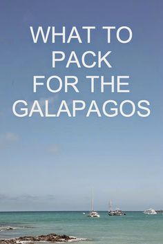 Another post about the Galapagos! All of the photos today are by our friend,  Melissa Hope .        While in the Galapagos, it seemed eve...