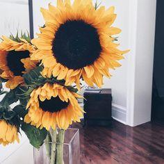 #Flowers #Sunflowers