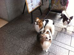 Cute papillons I met today :)