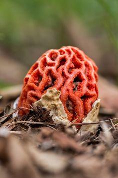Fungi by Arpad Radoczy on 500px