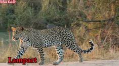 odgłosy zwierząt dla dzieci edukacyjne   dzikie zwierzęta dla dzieci   Bibon KidsTV - YouTube