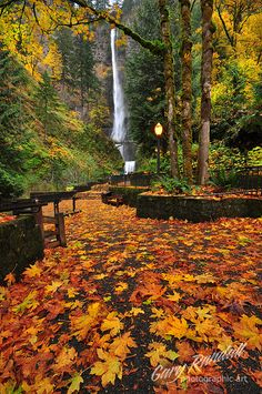 Gary Randall, Confetti The end of the road for Autumn 2011 at Multnomah Falls.